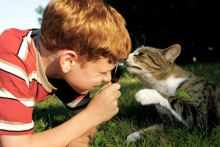 little boy with magnifying glass looking at cat